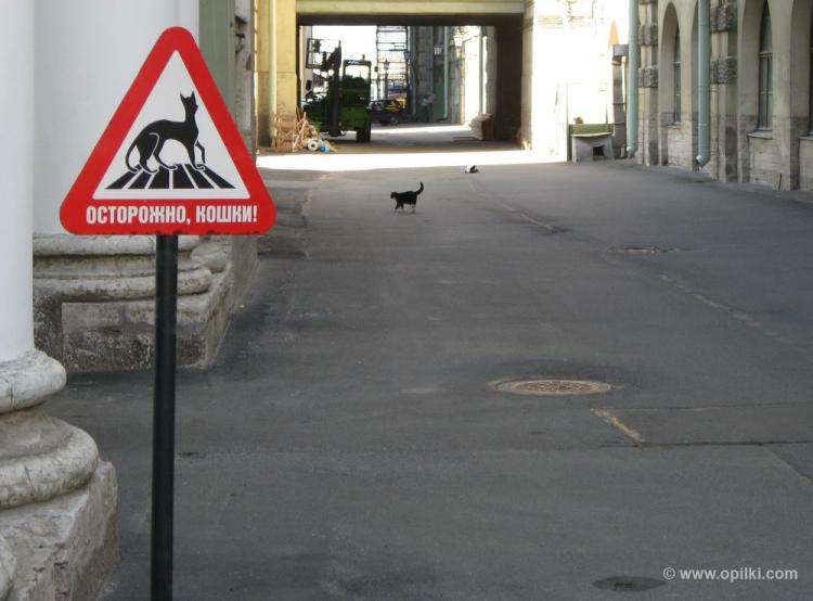 В Петербурге трепетно относятся к животным