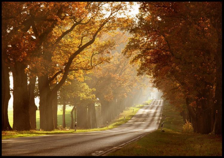 В город приходит осень