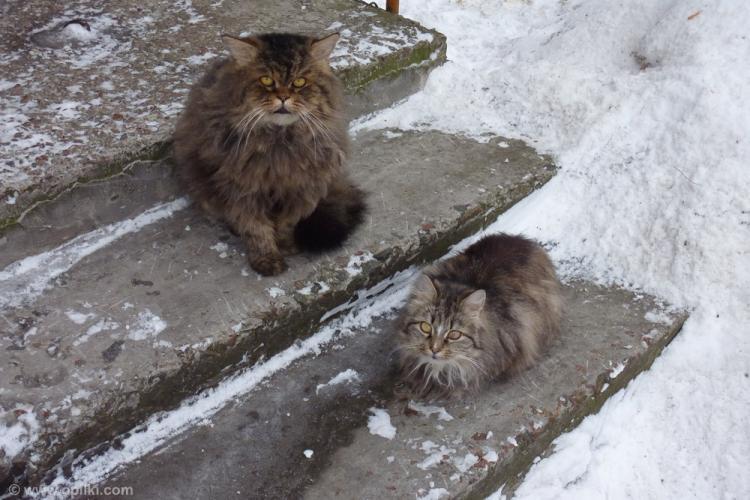 Коты раз