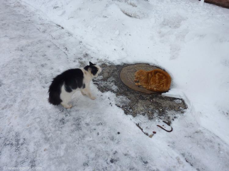Коты два
